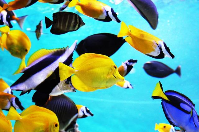 אקווריום לדגים