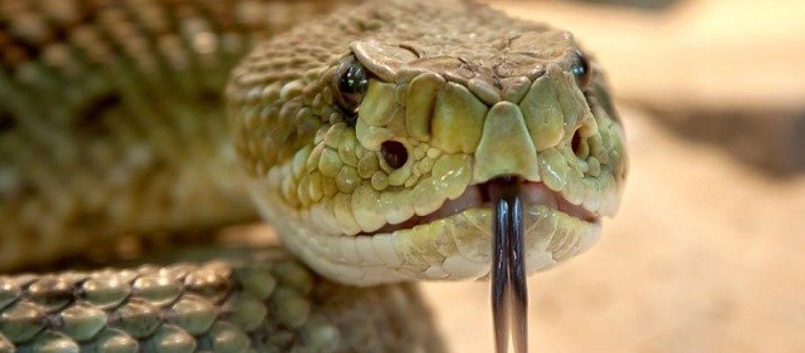 הנחשים הנפוצים בישראל